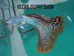 GUPPY METAL RED