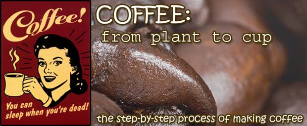 Coffee: From Plant to Cup