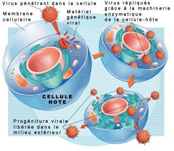 Propagation du virus grippal