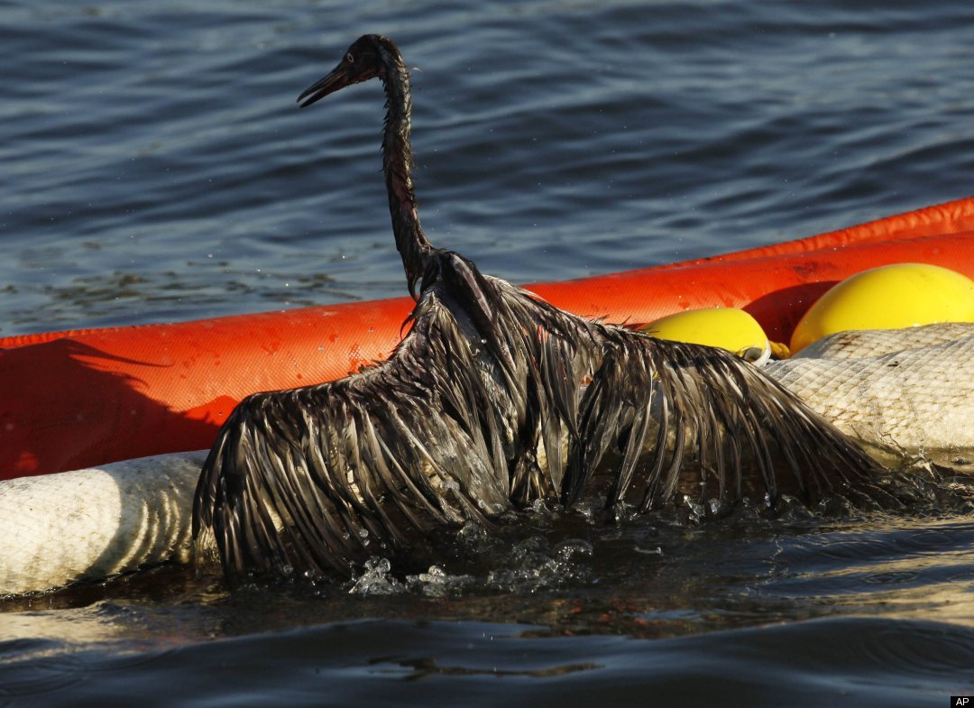 essays on oil spills Free essay: ethical issues surrounding the bp oil spill by: angela higgins december 16, 2010 the bp oil spill which happened on april 20, 2010, was the.