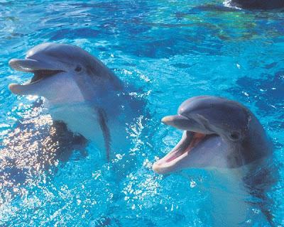 Delfines: Telepatía / Burbujas de aire Where-do-dolphins-live