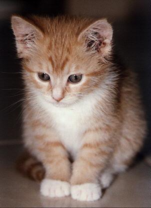 Ichsan025104: Foto-foto Kucing Imut