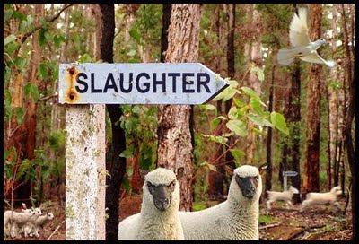 http://4.bp.blogspot.com/_ZkSSURCm3FI/Sv5LW6lcArI/AAAAAAAAD0Y/0F6lI00LN3s/s400/Lambs-2-Slaughter.jpg