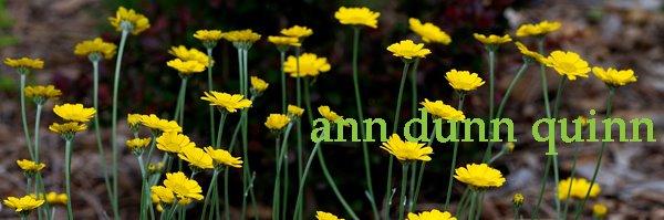 Ann Quinn Art
