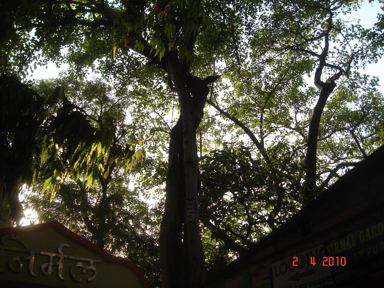 Panchavati, Nasik