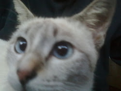 My blue eyes cat...i love blue...huhu