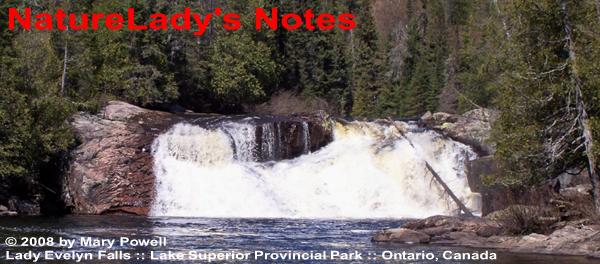 Naturlady's Wilderness Blog
