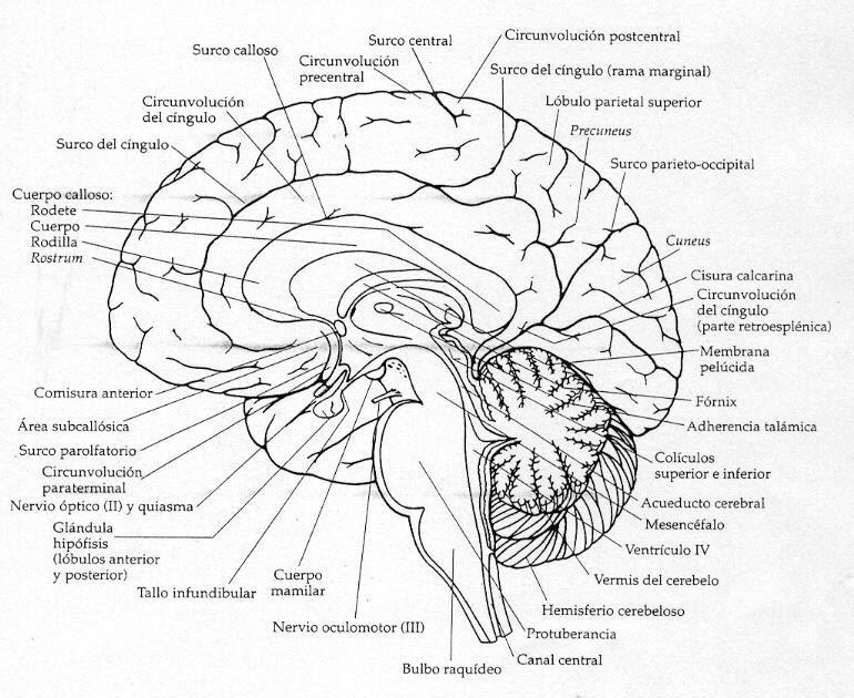 oniric insomnia  psicobiolog u00eda