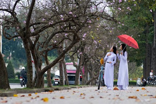 Ban flower in Hanoi