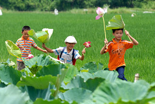 The children come and go freely between lotus pond