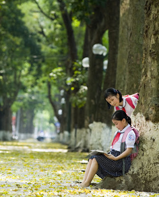 Hanoi in May - A time for trees change new leaf