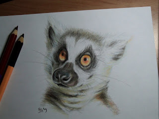 Kiki cartoon ring-tailed lemur catta drawing