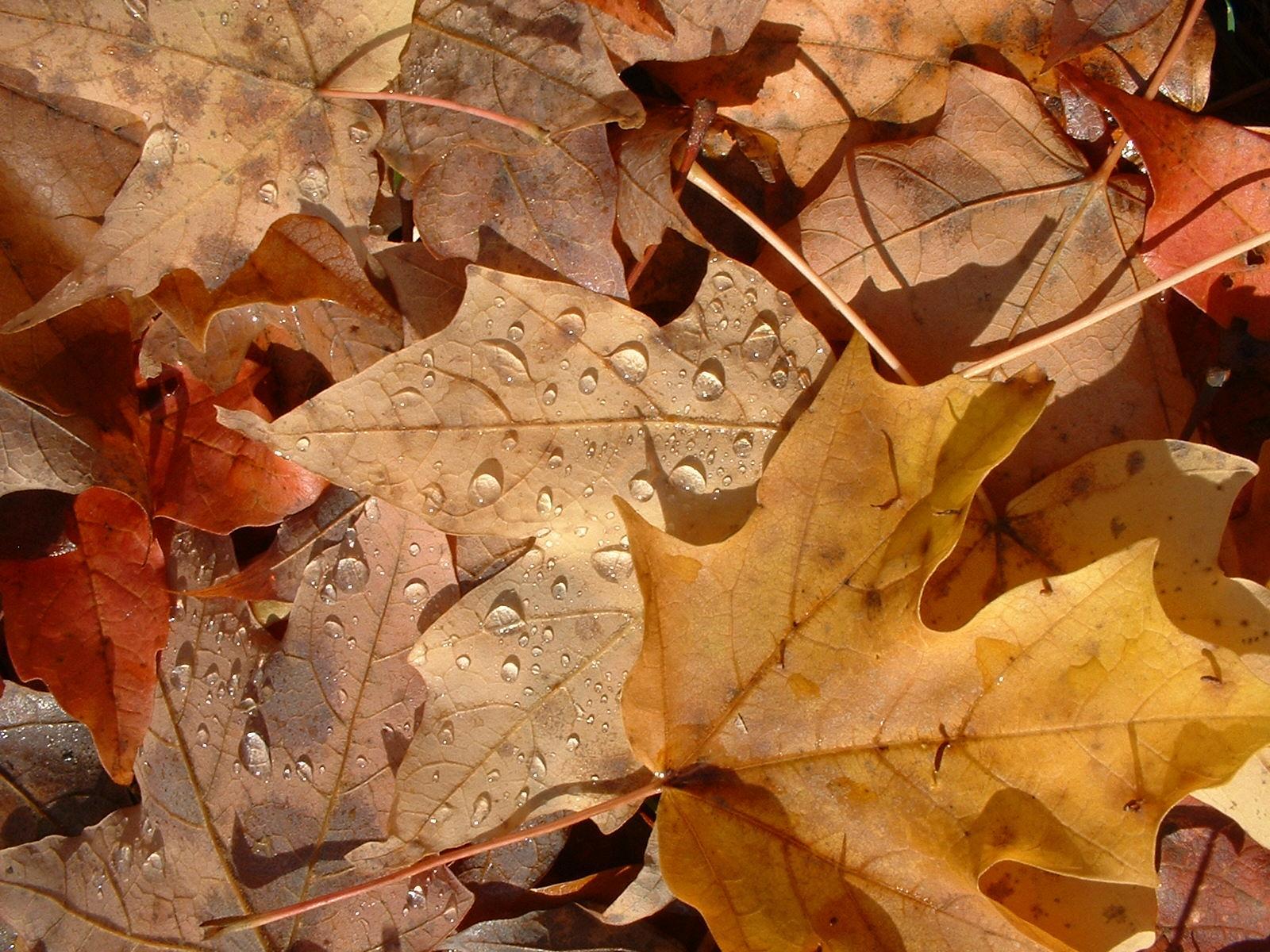 http://4.bp.blogspot.com/_ZueG3OvW8_k/TIwASGsRViI/AAAAAAAADXo/_UzI0g-hun0/s1600/FL_autumn_leaves.jpg