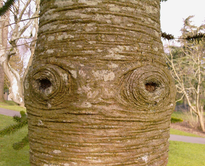 EYES IN THE TREE