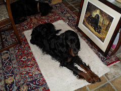 Henny the Gordon Setter