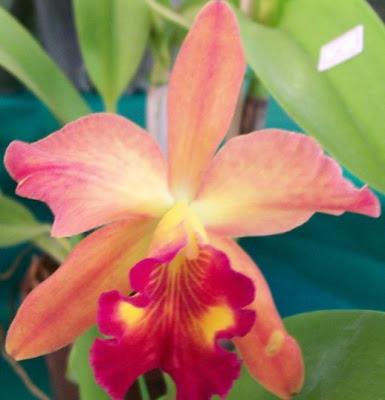 http://4.bp.blogspot.com/_ZvUxxbX5vxM/SYhOF1lm37I/AAAAAAAAAU8/AO88nGeqzFs/s400/Imagem+1177.jpg
