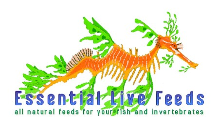 Visit www.essentiallivefeeds.com and www.oceanpods.com to buy copepods for your marine tank