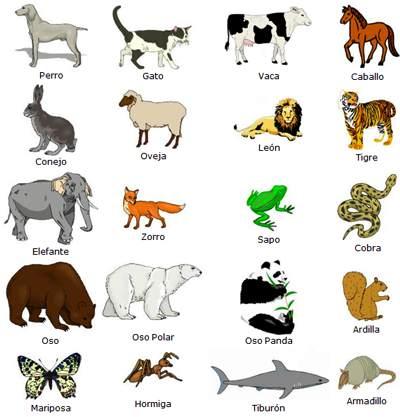 Qual animal você seria se você fosse um animal qual você seria