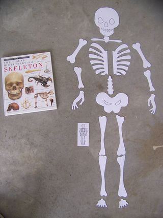 Large skeleton print out