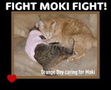 Purr for Moki!