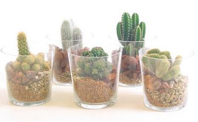 plantas cactus en cristal