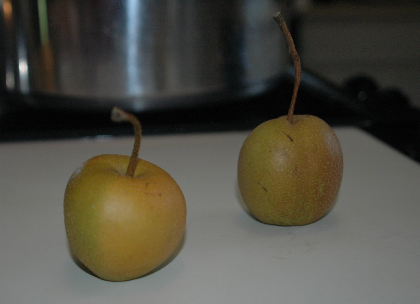 Shinko asian pear edible landscaping - Next I Contacted Edible Landscaping The Folks There End Up Being The Unfortunate Recipients Of Any Fruity Questions I Have That Can T Be Solved By A