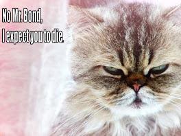 evil cat! ha ha ha!!!