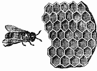 Bee Comb