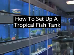 how to setup tropical fish tank