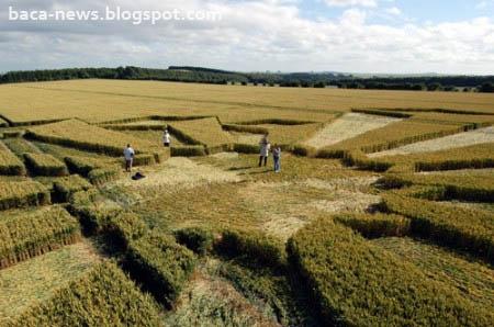 Crop Circle | Misteri Alam Crop Circle Yang Belum Terpecahkan