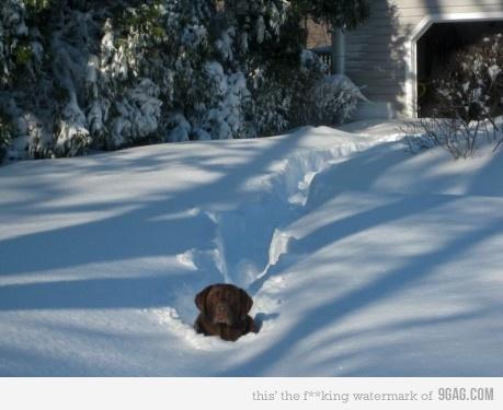 Cachorro atravessando a neve.