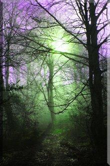 Juego de Colores con la Niebla en el Bosque de Ballo