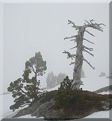 Tronco de pino negro camino a Soumcouy