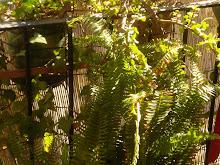 Plantas de la terraza