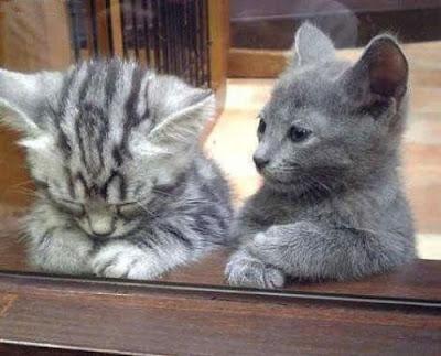 Je veux rp. Sad_Kitten