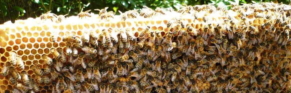 Brunny Bees