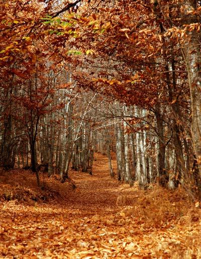 [bosque.jpg]