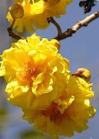 Buriram Flower