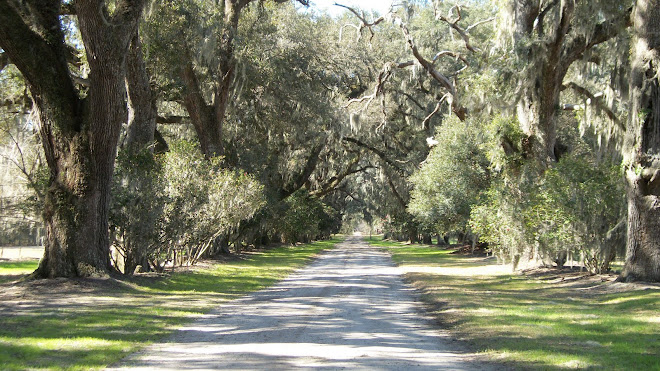 Mansfeild Plantation Oak Alley