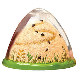 anthill ant farm