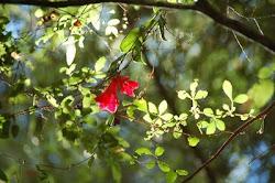 El Huidizo Aroma del Bosque