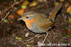 Injusticia Ornitológica