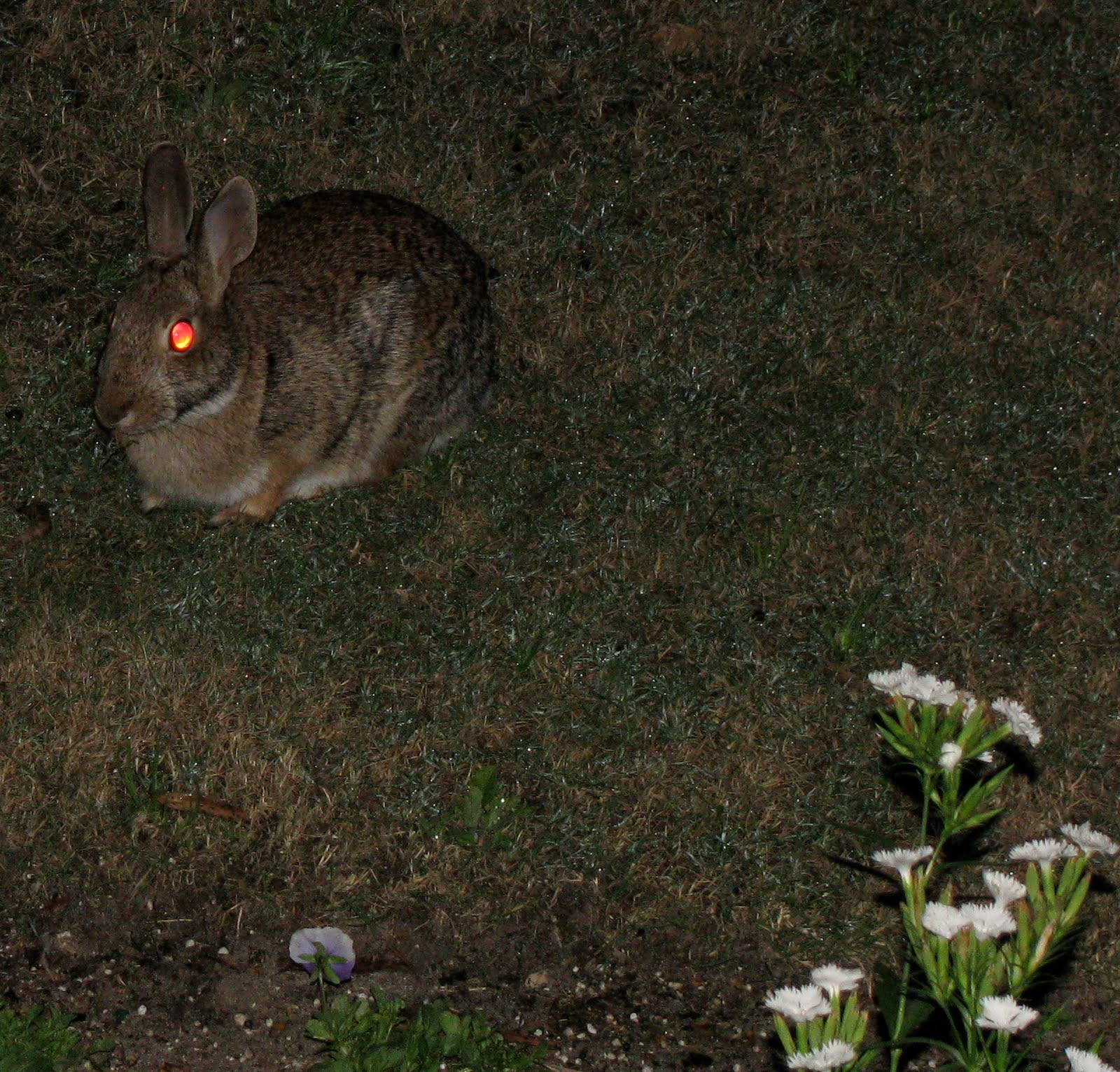 [Bunny-Red-Eyes]