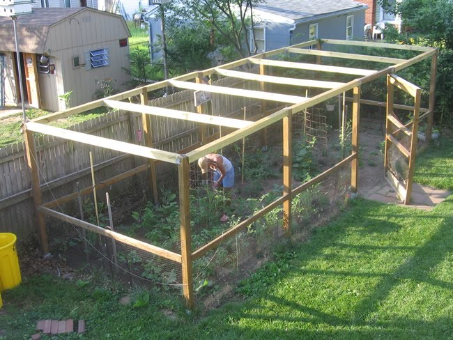 Grow it eat it string beans and okra for Garden cage