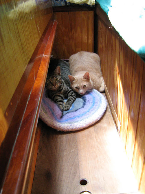 After a winter at the dock the cats are alittle distressed by a sail