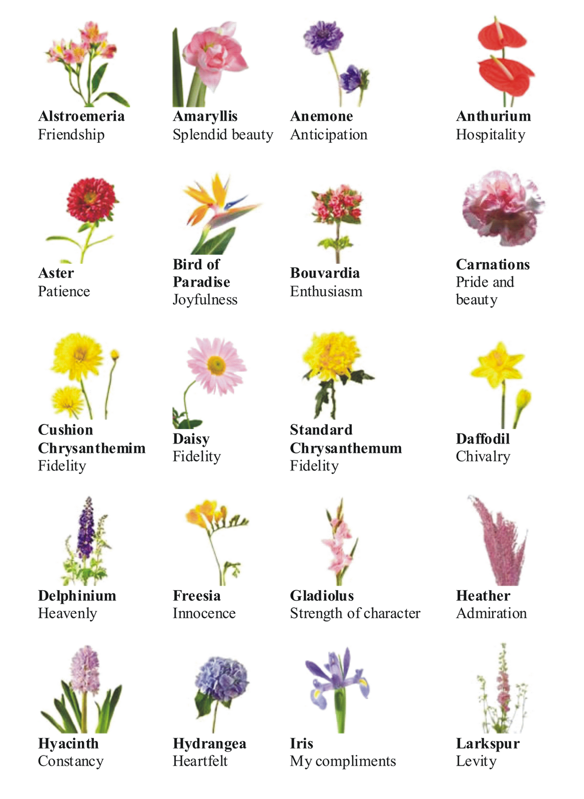 Kinds Of Lines In Art And Its Meaning : Flower pictures and names list