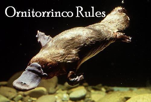 Ornitorrinco Rules