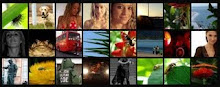 MAIS FOTOGRAFIAS