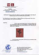 Certificados  Logotipo