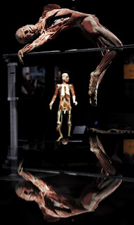 Exhibition Body Worlds